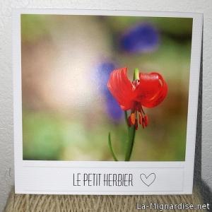 Carte Postale Originale - Le petit herbier n°1 : lilium Pomponium